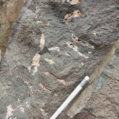 Pipe vesicles in basalt